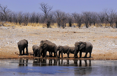 namibia elephants waterhole peter koelbleitner