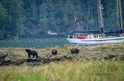 great bear rainforest bears maple leaf boat t crocker