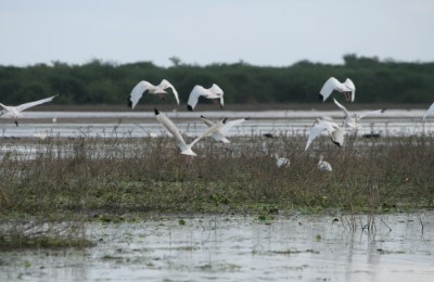 belize crooked tree birding travel