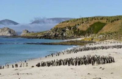 falklands magellanic penguins oceanwide