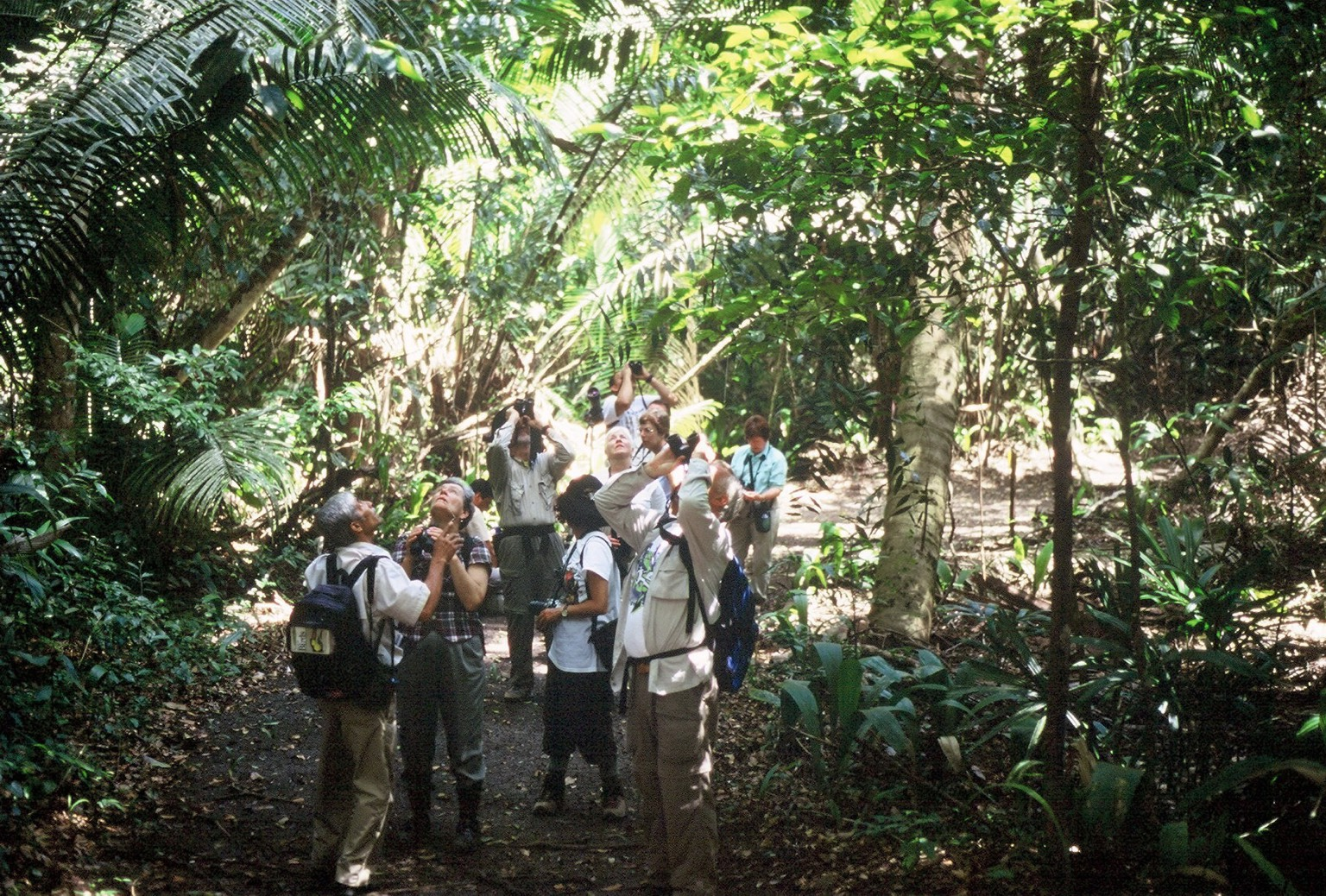 Birds of Belize Tour