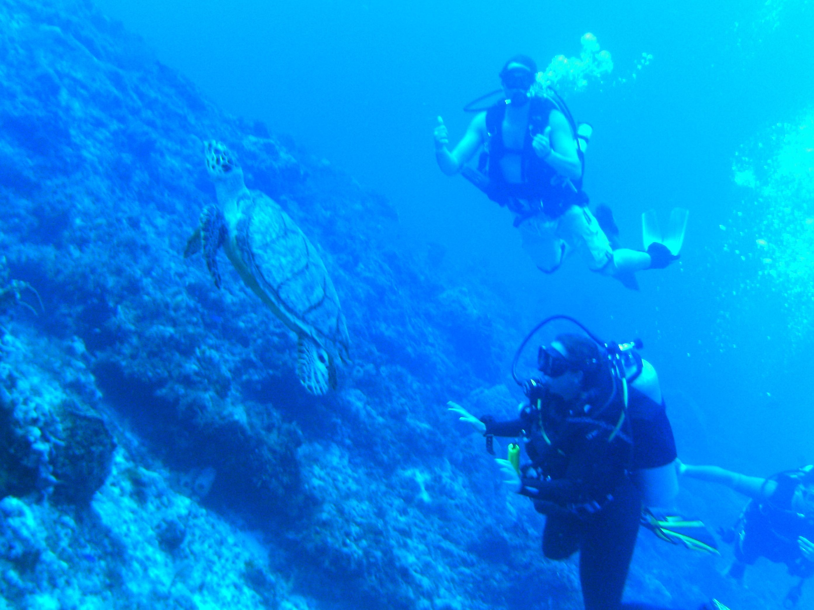 Diving with turtles S Mccall photo