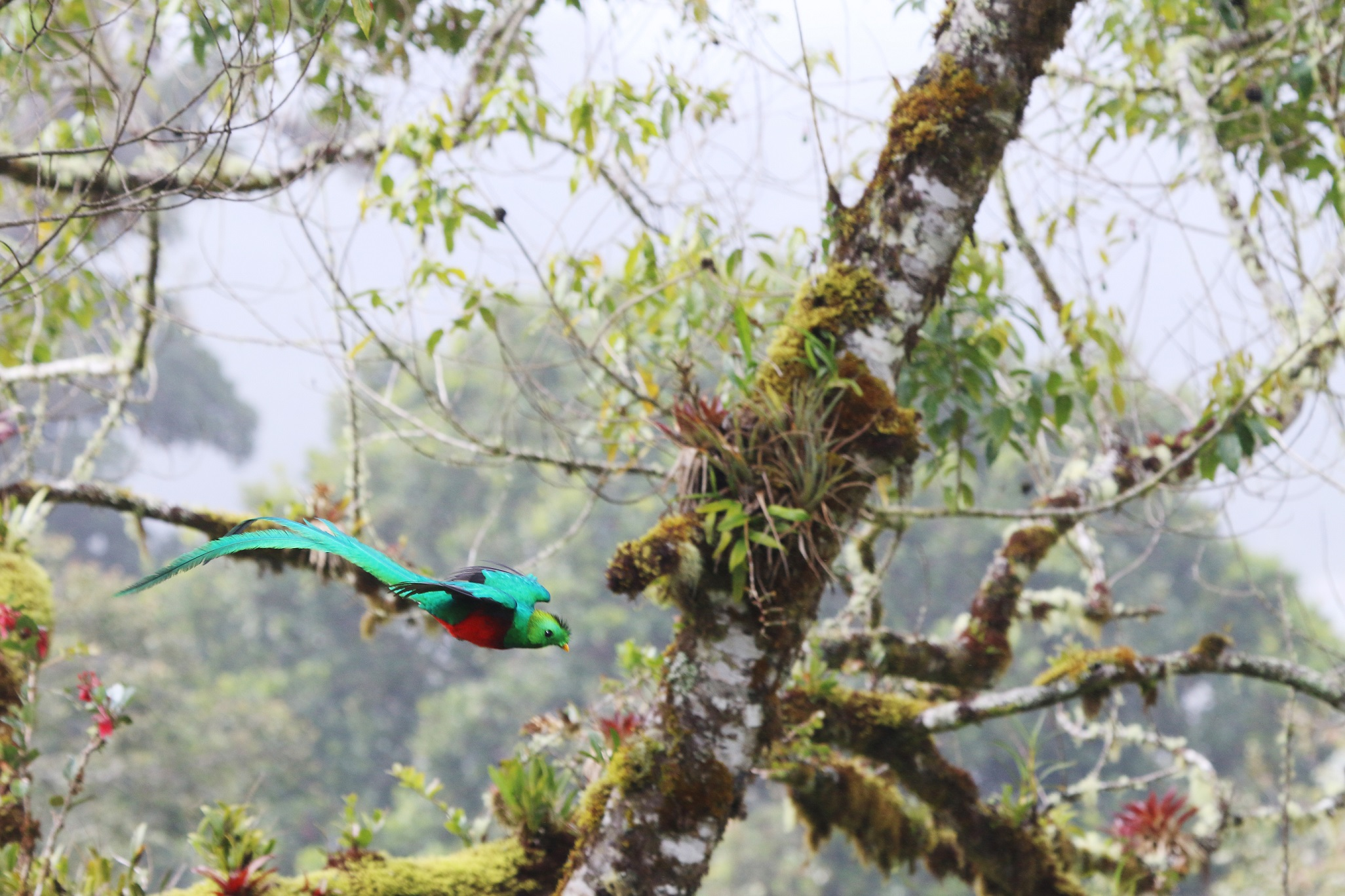 Quetzal, photo by M Fallas